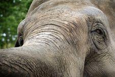 Elephant S Gaze Behind Trump Stock Photo