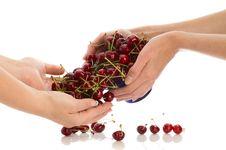 Cherries In Hands Stock Photography