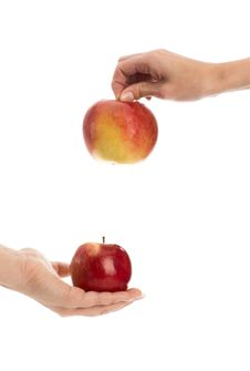 Free Two Apples In Hands Royalty Free Stock Photo - 14737535