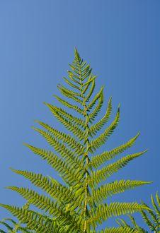 Free Green Leaf Stock Photos - 14738093