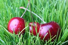 Free Red Cherries Stock Images - 14738784