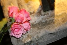 Free Flower And Stone Stock Images - 14738814