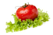 Free Red Juicy Tomato With Litho Of The Salad Stock Photo - 14738990
