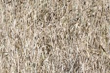 Free Grass Texture Royalty Free Stock Images - 14739319