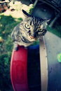 Free Cat On A Kid S Bench Royalty Free Stock Photography - 14743547