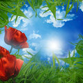 Free Green Meadow Stock Photography - 14745922