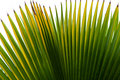 Free Palm Leaf Stock Image - 14747771