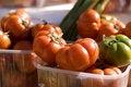 Free Tomatoes Stock Photo - 14748950