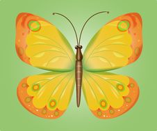 Free Butterfly Royalty Free Stock Photography - 14740147