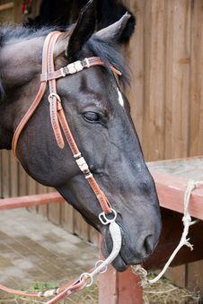 Free Horse Stock Photo - 14741400