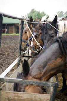 Free Horses Stock Photos - 14741413