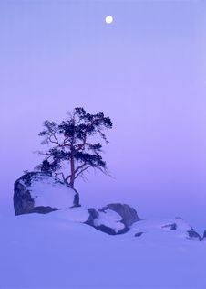 Free Winter Landscape Royalty Free Stock Photos - 14741858