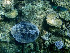 Underwater Turtle Above A Coral Reef Royalty Free Stock Photography