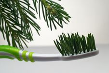 Free Toothbrush With Fir Branch Stock Photography - 14743732