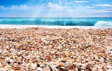 Free Sunny Day On A Beach Stock Photo - 14745730