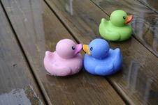 Free The Lonely Duck Stock Photos - 14746133