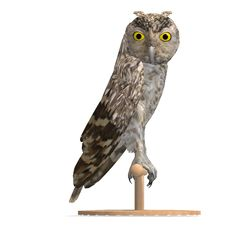 Free Little Owl Bird. 3D Rendering With Clipping Path Stock Images - 14746204