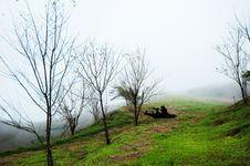 Free Dry Tree On Fog Royalty Free Stock Image - 14747446
