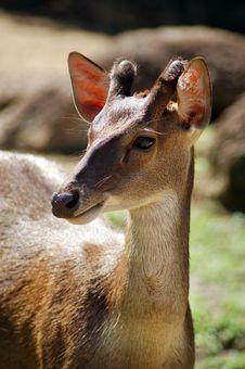 Free Deer Stock Photo - 14747640
