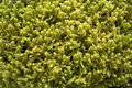 Free Forest Moss Background Royalty Free Stock Photography - 14750207