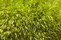 Free Forest Moss Background Royalty Free Stock Image - 14750286