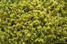 Forest Moss Background Royalty Free Stock Photography
