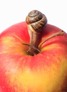 Free Snail On An Apple Royalty Free Stock Photography - 14750527