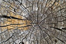 Free Old Tree Rings Stock Photography - 14751212