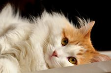 Cat Reacting Stock Image
