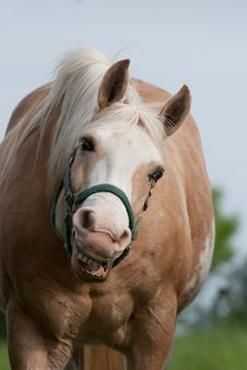 Free Smiling Horse Stock Images - 14752934