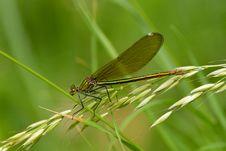 Free Dragonfly Stock Photo - 14754420