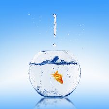 Free Goldfish Jump Royalty Free Stock Image - 14754626