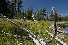 Yellowstone Landscape Stock Photos