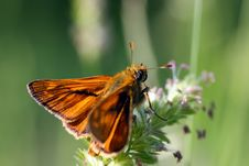 Free Velvety Butterfly Royalty Free Stock Image - 14754976
