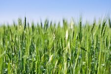 Free Green Field And Blue Sky Royalty Free Stock Photo - 14756025