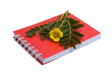 Free Silverweed And Notebook Stock Photo - 14756160