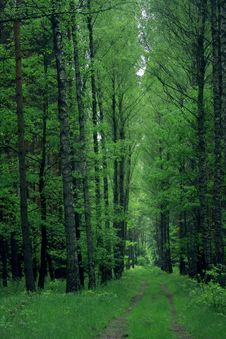 Free The Way In Forest Stock Images - 14756564