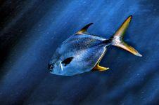Free Fish Stock Photography - 14757102