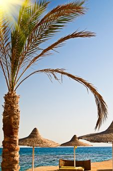 Beautiful Palm And Seashore In The Resort. Royalty Free Stock Photo
