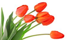Free Red Tulips Stock Photography - 14757902