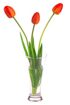 Free Three Red Tulips Stock Images - 14757914