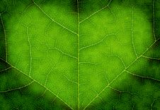 Free Heart Shape On A Green Leaf Texture Royalty Free Stock Image - 14758156
