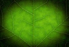 Free Heart Shape On A Green Leaf Texture Royalty Free Stock Photo - 14758305