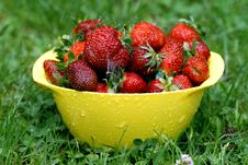 Strawberries In The Rain Royalty Free Stock Image