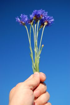 Free Cornflowers Stock Images - 14758784