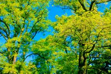 Free Tree Canopy Royalty Free Stock Photo - 14758945