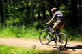 Free Cyclist In Forest Stock Photography - 14763452