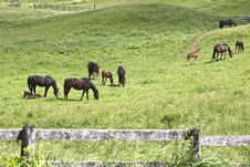 Free Horses And Babies In The Field Royalty Free Stock Photography - 14761357