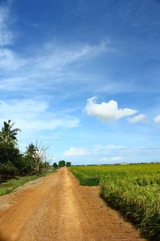 Free White Cumulus Clouds And A Blue Sky On Paddy Field Stock Images - 14761534