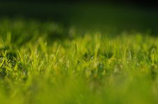 Free Grass Stock Photography - 14761762